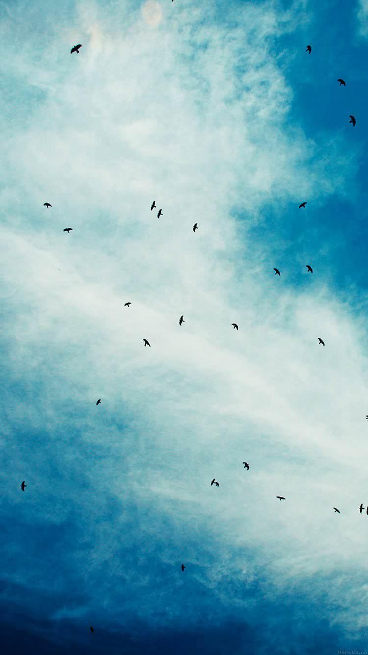 鳥の群集 iPhone6 壁紙