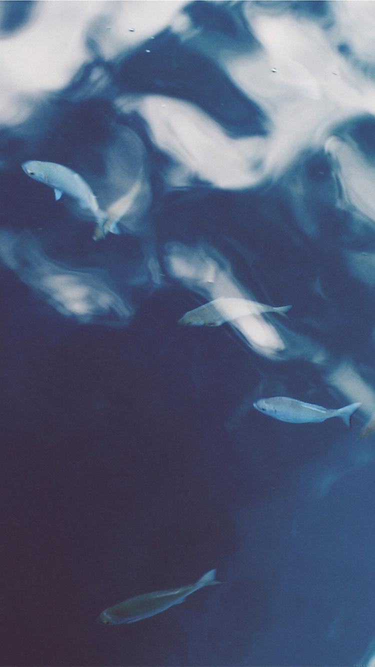 魚の群れ iPhone6壁紙