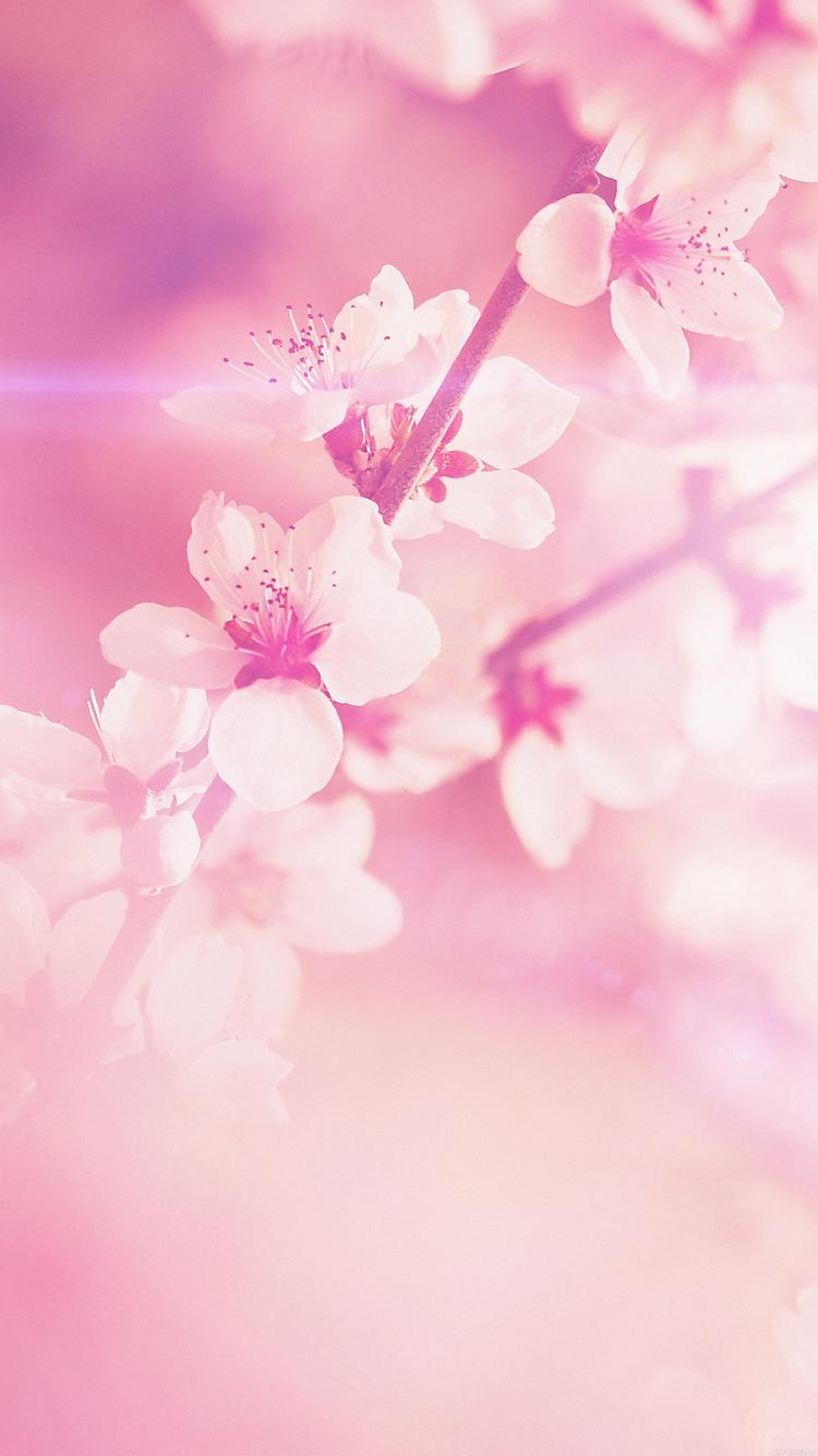 桜 iPhone6壁紙