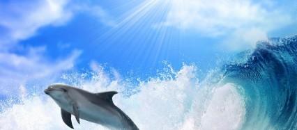 イルカと波 Android壁紙