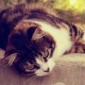 休憩中の猫 Android壁紙