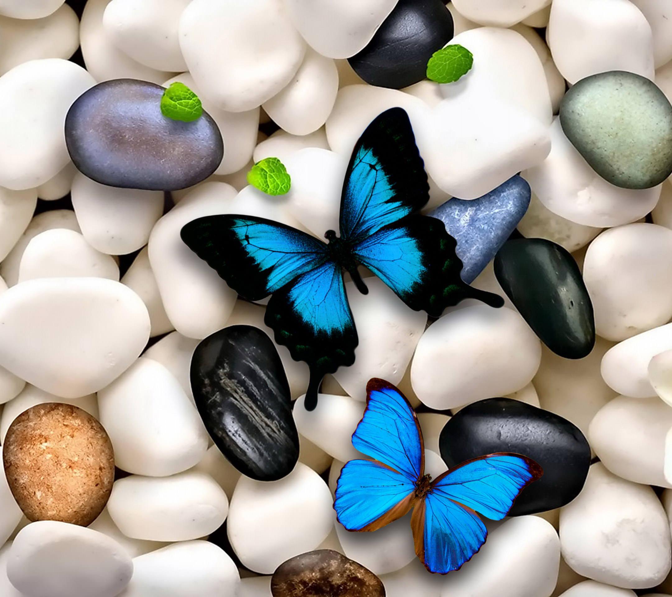 青い蝶と石 Android壁紙