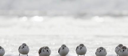 波打ち際の鳥 iPhone6 Plus壁紙