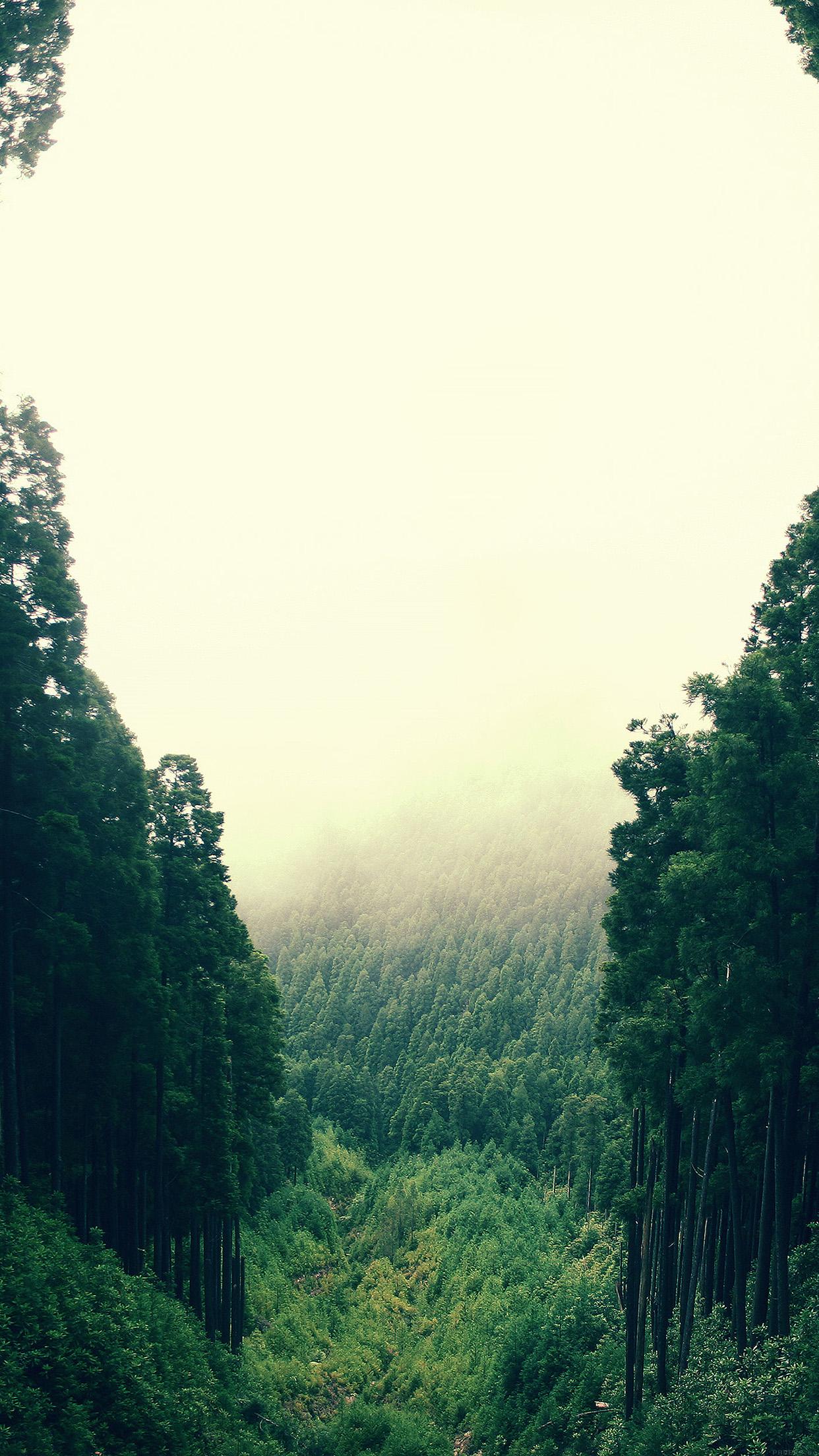 熱帯雨林 iPhone6 Plus壁紙