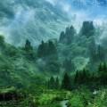 緑の大自然 iPhone6壁紙