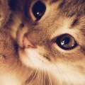 キュートなかわいい子猫 iPhone6壁紙