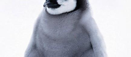 かわいいペンギンの子供 iPhone6壁紙