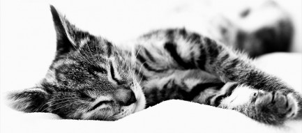 居眠りする猫 モノクロ iPhone6壁紙