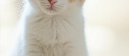 チョコンと座っている子猫 iPhone6壁紙