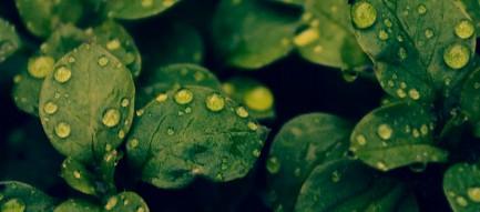 水滴のついた緑の葉 iPhone6壁紙