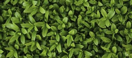 Green Grass iPhone6壁紙