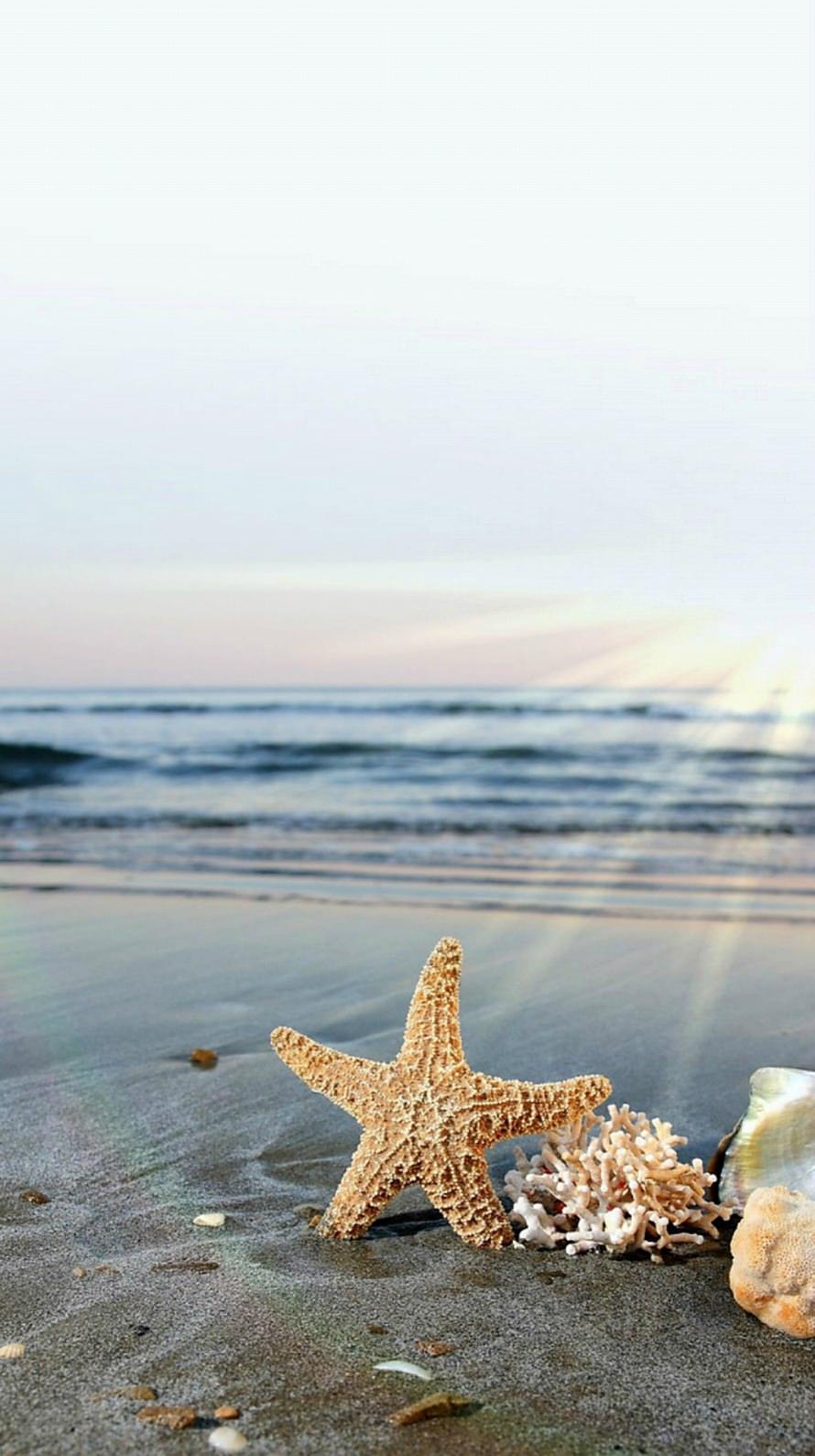 海とヒトデ iPhone6壁紙