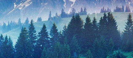森 丘陵 iPhone6壁紙