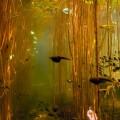 池の中の世界 おたまじゃくし iPhone6壁紙