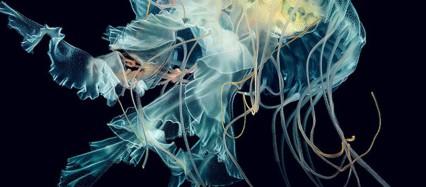 青い海月 iPhone6壁紙