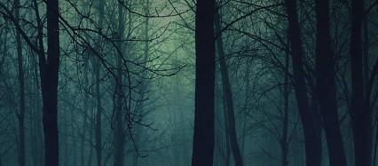 ほの暗い森 iPhone6壁紙