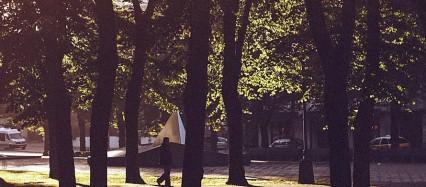木の木陰 iPhone6壁紙