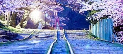 夜桜と線路 iPhone6壁紙