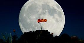 星・月・宇宙の壁紙#14サムネイル