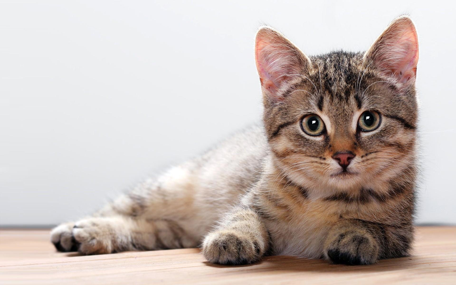 Pc用猫の壁紙 Cat 猫 ねこ画像まとめ 7 08更新 Naver まとめ