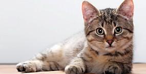 猫の壁紙#3サムネイル