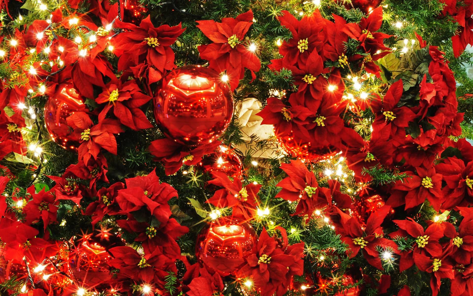 Pc用クリスマスの壁紙 1920 1200 51 Wallpaperbox