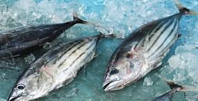 魚の壁紙#17サムネイル