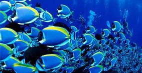 魚の壁紙#2サムネイル