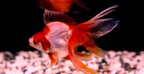 魚の壁紙#5サムネイル