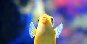 魚の壁紙#6サムネイル
