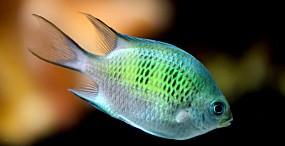 魚の壁紙#7サムネイル
