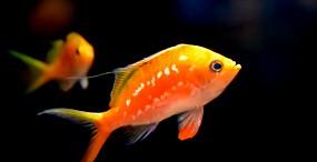 魚の壁紙#8サムネイル