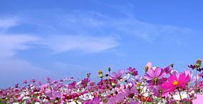 花の壁紙#10サムネイル