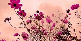 花の壁紙#11サムネイル