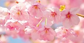 花の壁紙#13サムネイル