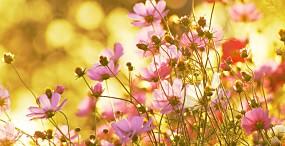 花の壁紙#6サムネイル
