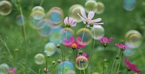 花の壁紙#9サムネイル