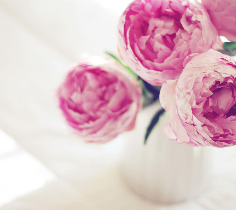 ピンクの薔薇のスマホ用壁紙 Android用 960 854 Wallpaperbox