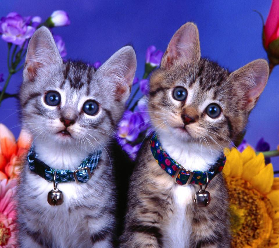 かわいい猫 スマホ用壁紙(Android用/960×854)