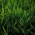 緑の夏草 Androidスマホ用壁紙
