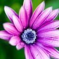 ピンクの花 スマホ用壁紙(Android/960×854)