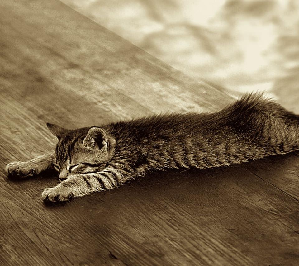 休憩中の猫 Androidスマホ用壁紙 Wallpaperbox