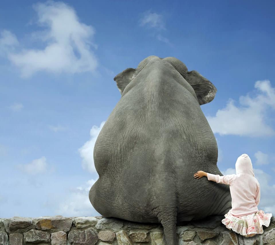 象との想い出 Androidスマホ用壁紙