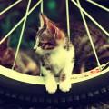タイヤと猫 Androidスマホ用壁紙