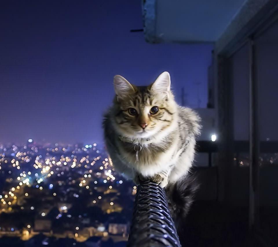手摺に佇む猫 Androidスマホ用壁紙 Wallpaperbox