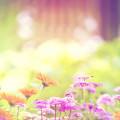 Flower Garden スマホ壁紙