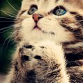 お願いする猫 iPhone6 壁紙