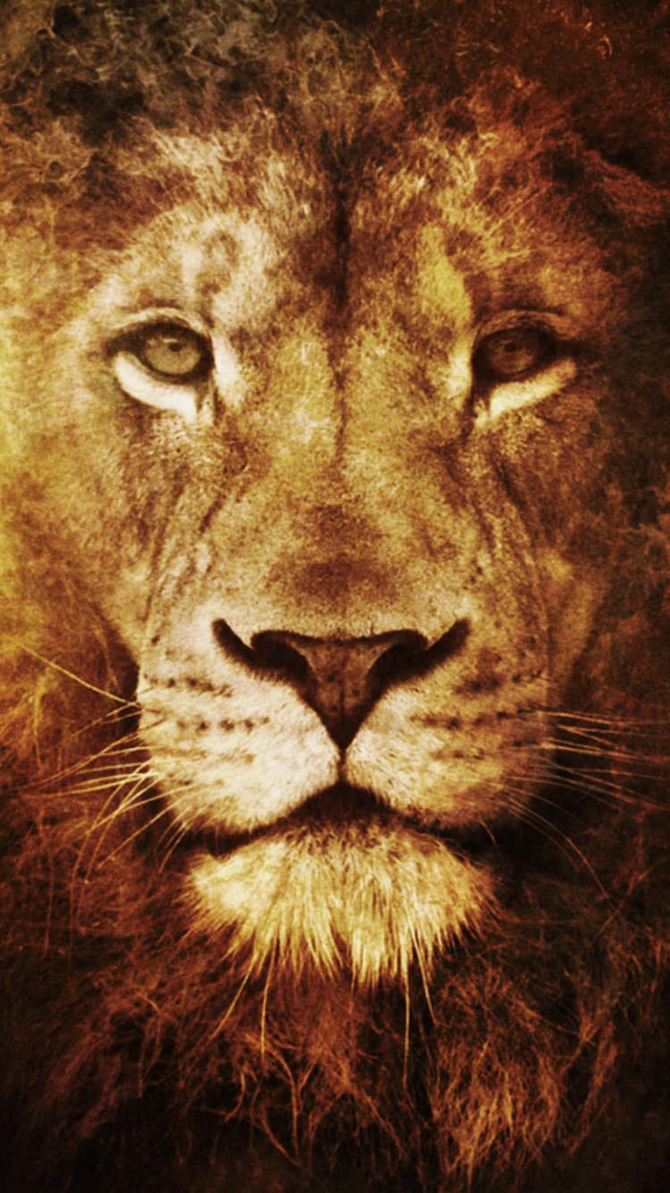 百獣の王 ライオン iPhone6 壁紙