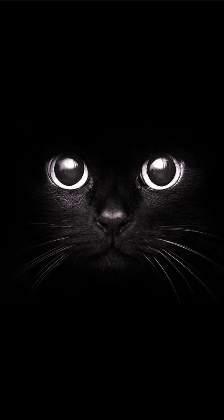 黒猫 Iphone6壁紙 Wallpaperbox