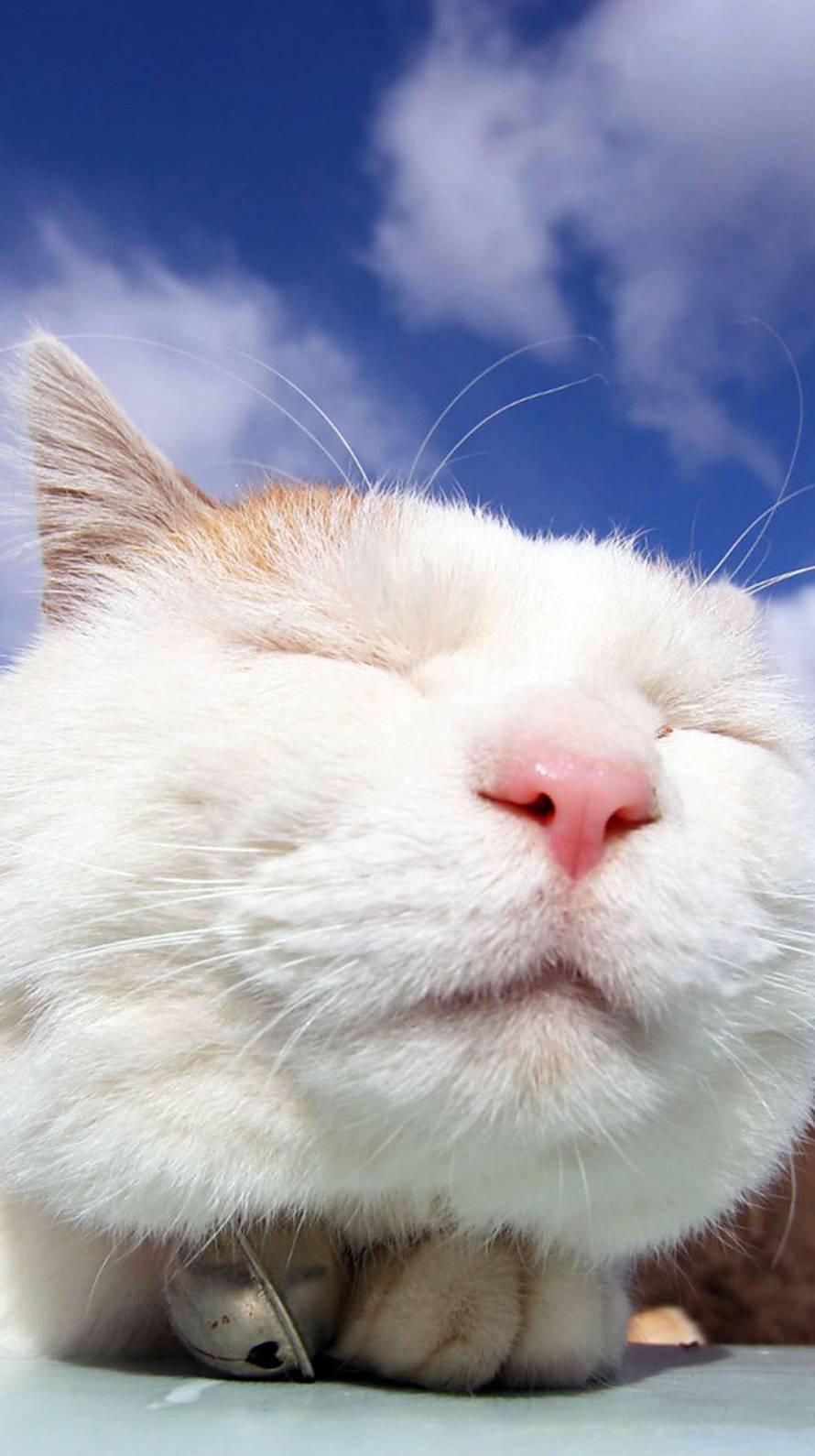 白猫のドアップ Iphone6壁紙 Wallpaperbox